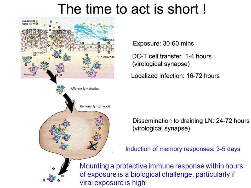 Mounting a protective immune response within hours of exposure is a biological challenge, particularly if viral exposure is high