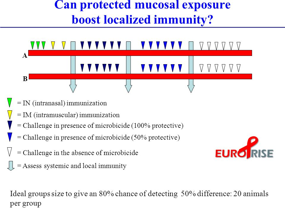 Can protected mucosal exposure boost localized immunity.