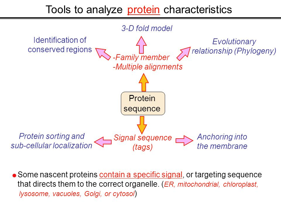 Tools to analyze protein characteristics Protein sequence -Family member -Multiple alignments Identification of conserved regions Evolutionary relationship (Phylogeny) 3-D fold model Protein sorting and sub-cellular localization Anchoring into the membrane Signal sequence (tags)  Some nascent proteins contain a specific signal, or targeting sequence that directs them to the correct organelle.