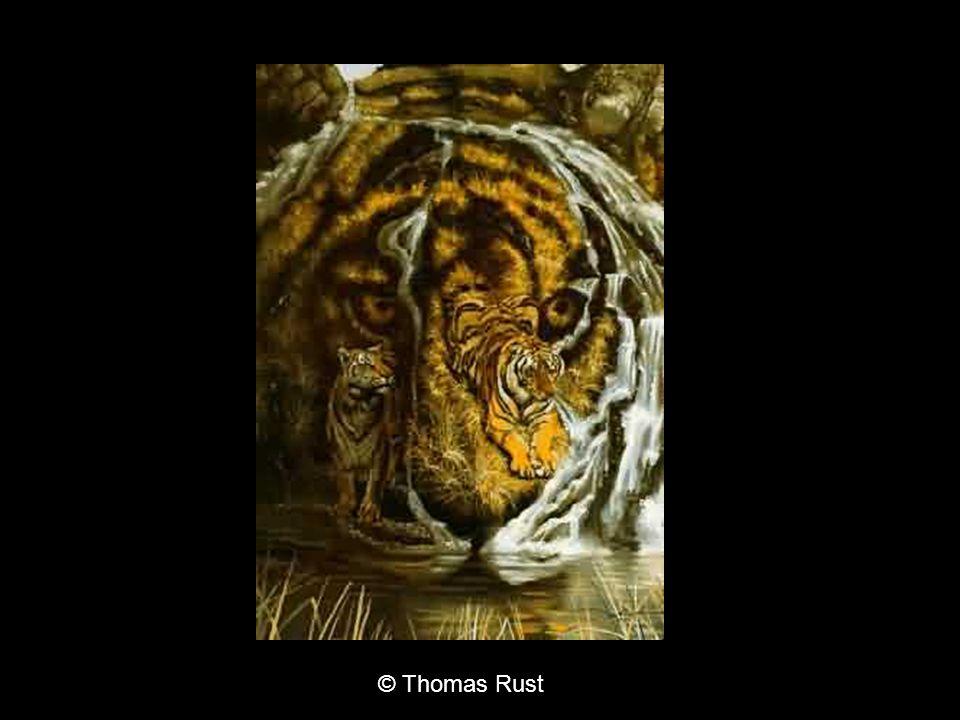 © Thomas Rust