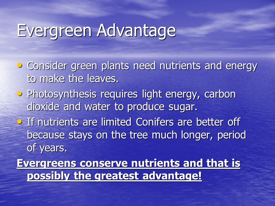 Evergreen Advantage Consider green plants need nutrients and energy to make the leaves.