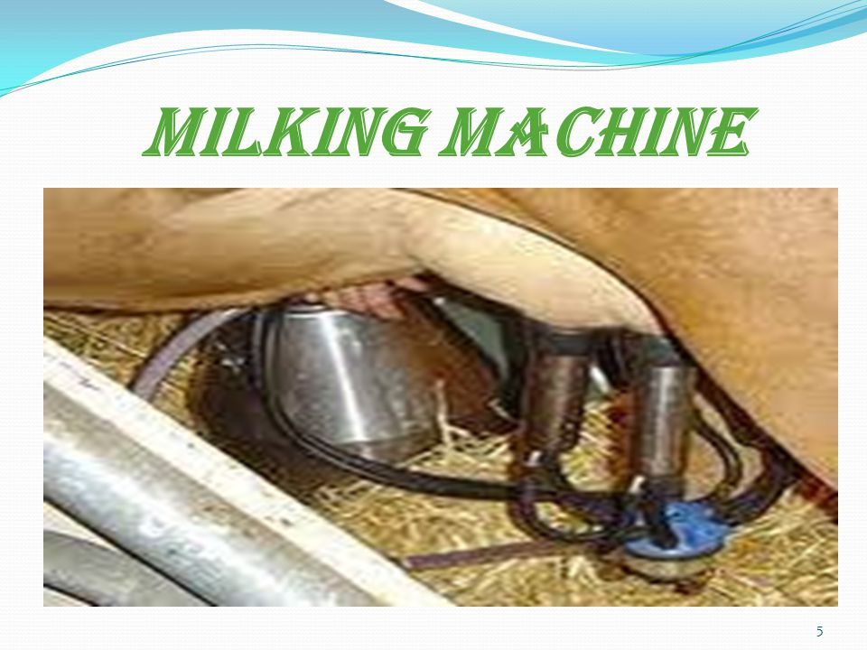 MILKING MACHINE 5