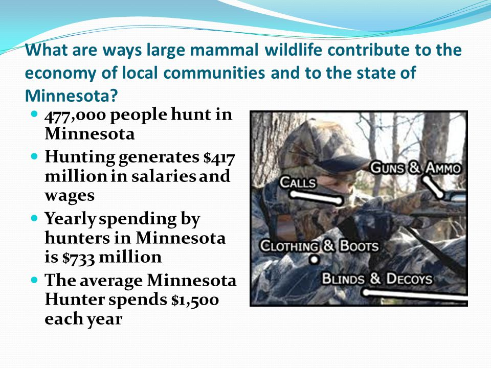 What are ways large mammal wildlife contribute to the economy of local communities and to the state of Minnesota.