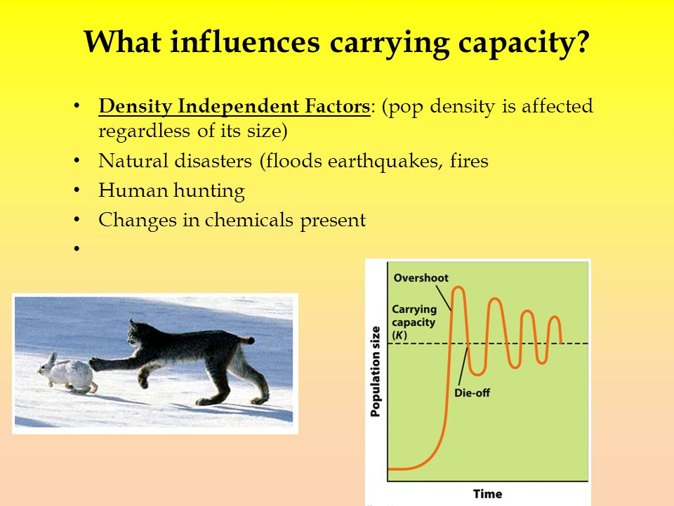 What influences carrying capacity.