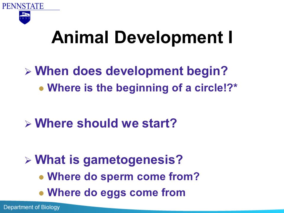 Animal Development I  When does development begin? Where is the beginning of a circle!?*  Where should we start?  What is gametogenesis? Where do s