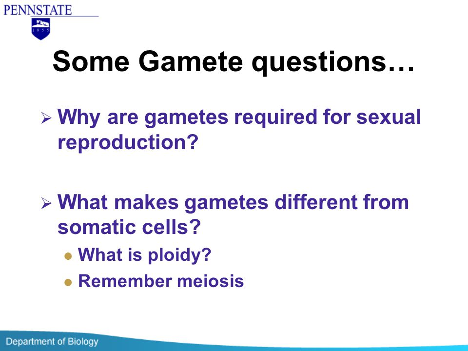 Some Gamete questions…  Why are gametes required for sexual reproduction?  What makes gametes different from somatic cells? What is ploidy? Remember