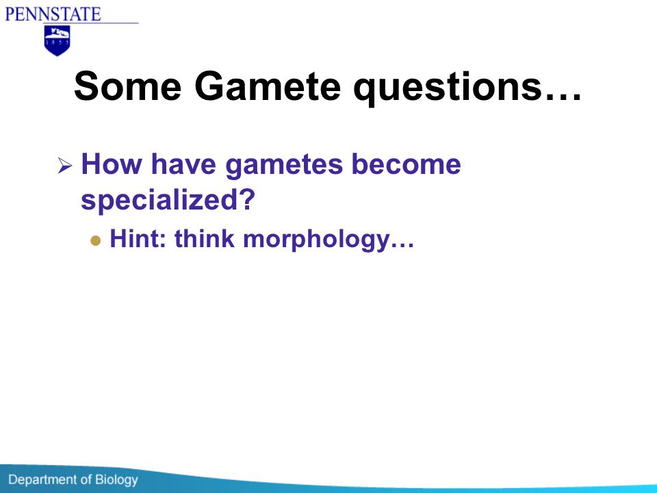 Some Gamete questions…  How have gametes become specialized? Hint: think morphology…