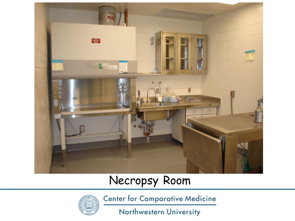Necropsy Room
