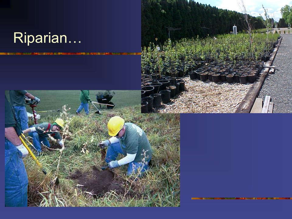 Riparian Enhancement In the community, public customer (state)