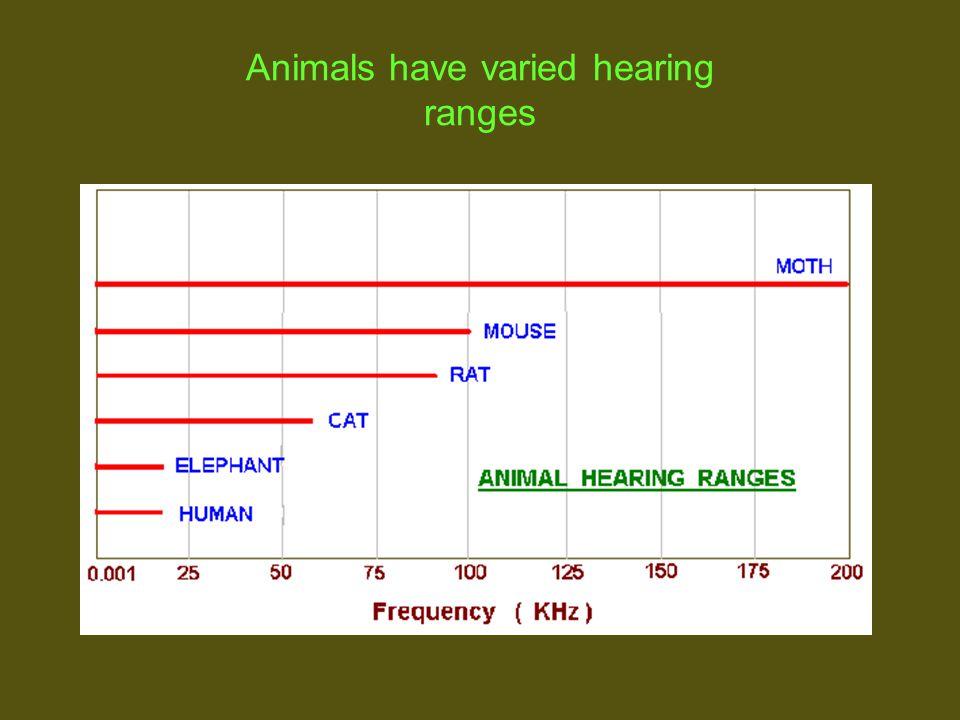 Animals have varied hearing ranges