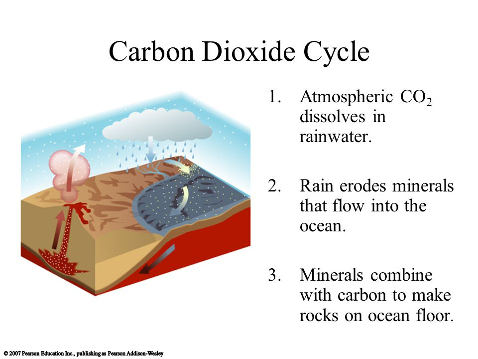 Carbon Dioxide Cycle 1.Atmospheric CO 2 dissolves in rainwater.