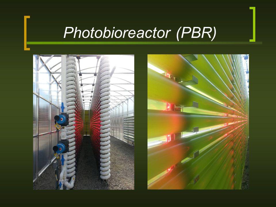 Photobioreactor (PBR)