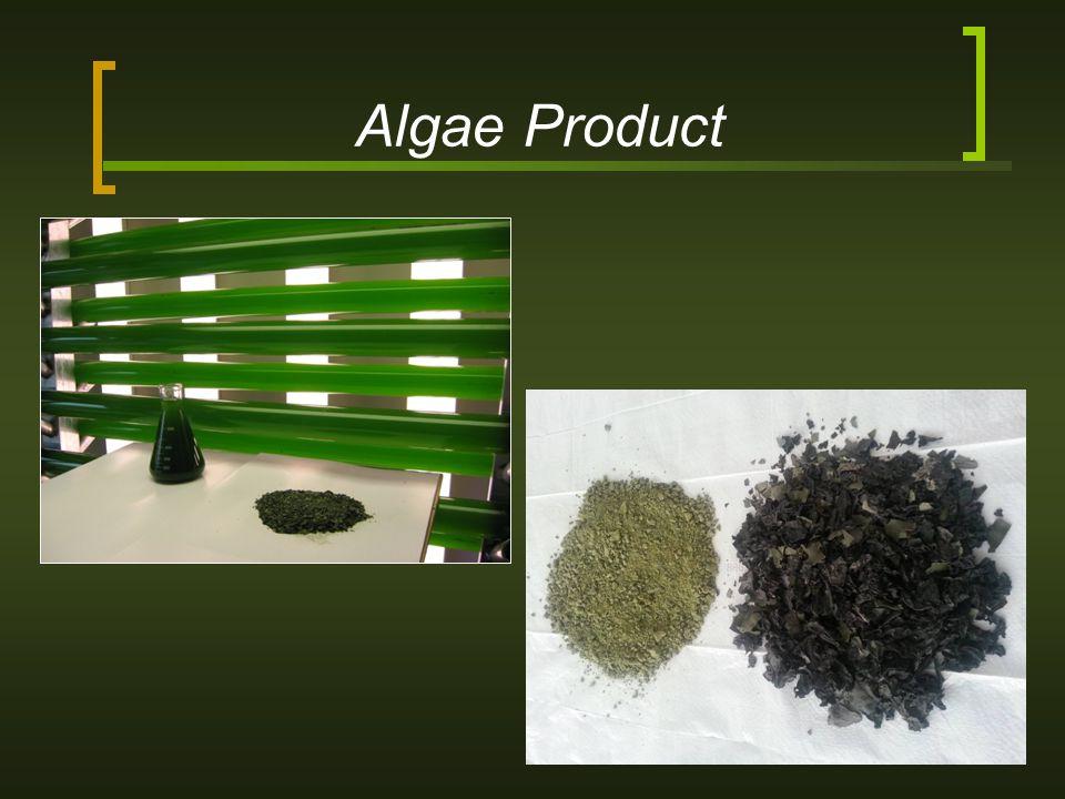 Algae Product