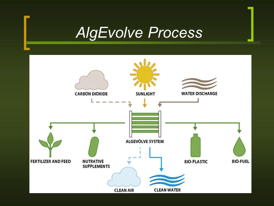 AlgEvolve Process