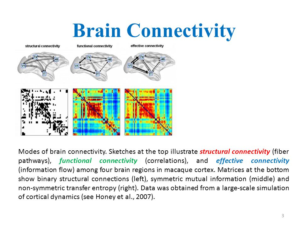 Dynamic Functional Connectivity: 4 One would expect that fast fluctuations of Functional Connectivity (FC) will occur during spontaneous and task-evoked activity while plasticity and development are accompanied by slower and mutually interdependent changes in Structural Connectivity (SC) and FC.
