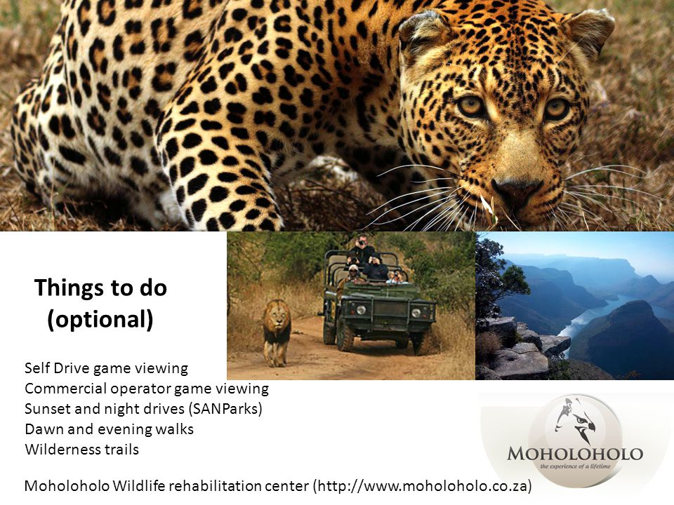 Things to do (optional) Self Drive game viewing Commercial operator game viewing Sunset and night drives (SANParks) Dawn and evening walks Wilderness trails Moholoholo Wildlife rehabilitation center (http://www.moholoholo.co.za)