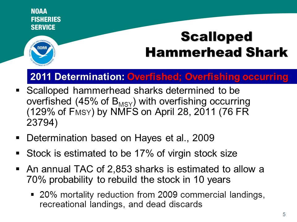 5 Scalloped Hammerhead Shark  Scalloped hammerhead sharks determined to be overfished (45% of B MSY ) with overfishing occurring (129% of F MSY ) by NMFS on April 28, 2011 (76 FR 23794)  Determination based on Hayes et al., 2009  Stock is estimated to be 17% of virgin stock size  An annual TAC of 2,853 sharks is estimated to allow a 70% probability to rebuild the stock in 10 years  20% mortality reduction from 2009 commercial landings, recreational landings, and dead discards 2011 Determination: Overfished; Overfishing occurring