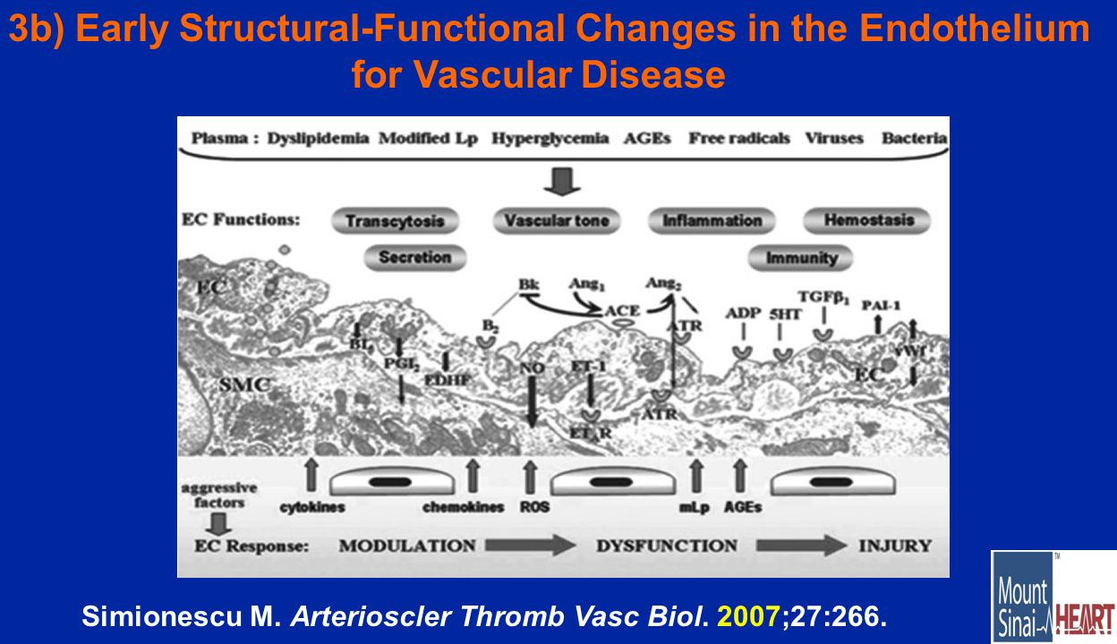 3b) Early Structural-Functional Changes in the Endothelium for Vascular Disease Simionescu M.