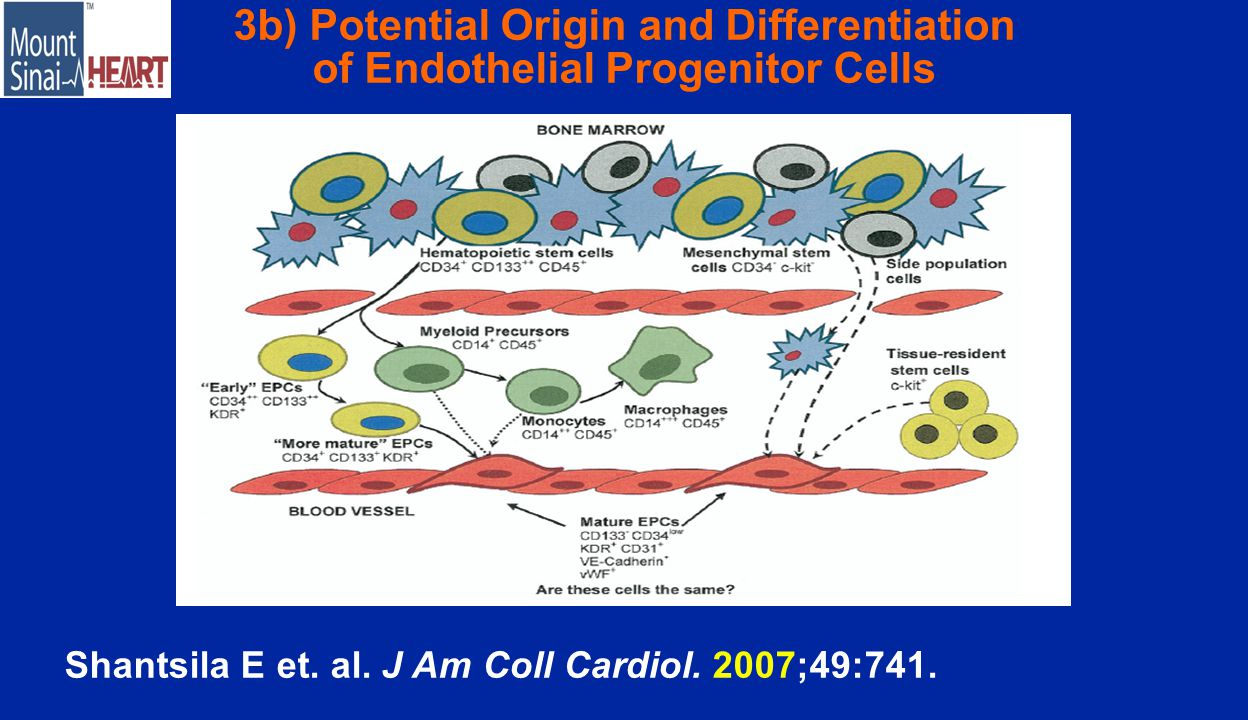 3b) Potential Origin and Differentiation of Endothelial Progenitor Cells Shantsila E et.