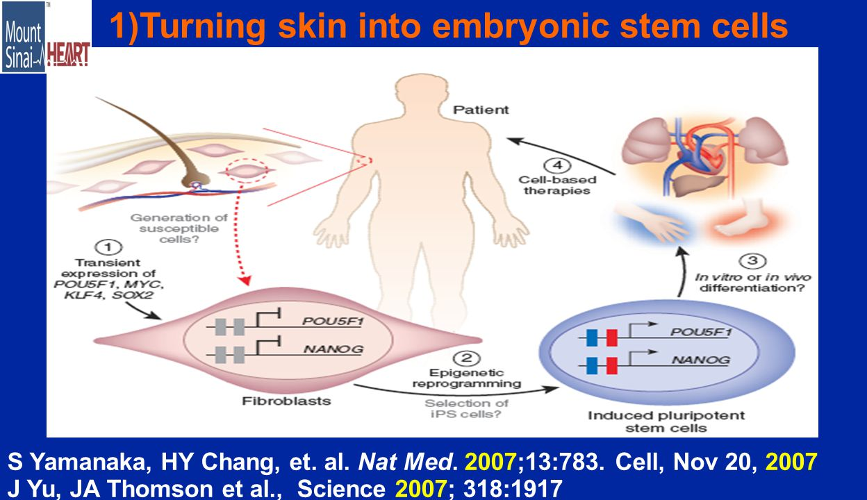 1)Turning skin into embryonic stem cells S Yamanaka, HY Chang, et.
