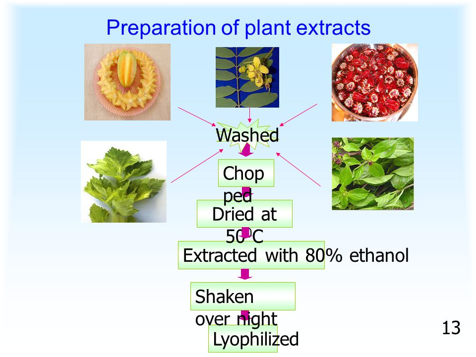 Extracted with 80% ethanol Lyophilized Preparation of plant extracts Washed Dried at 50 0 C Chop ped Shaken over night 13