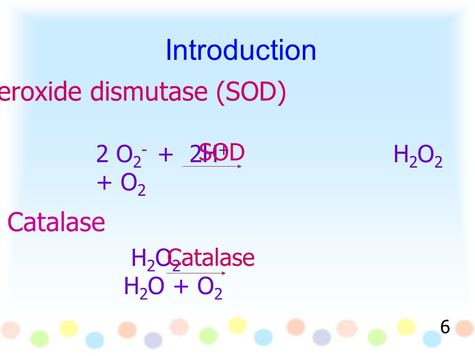 Introduction Superoxide dismutase (SOD) 2 O 2 - + 2H + H 2 O 2 + O 2 Catalase H 2 O 2 H 2 O + O 2 6 SOD Catalase