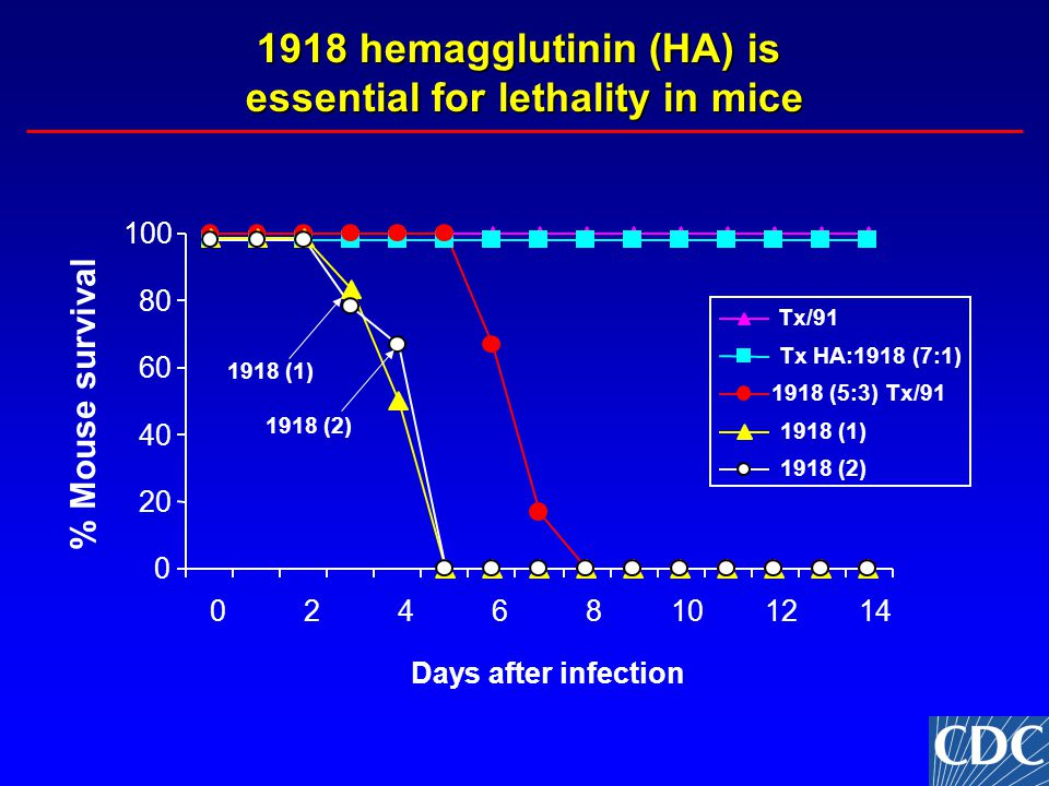 1918 hemagglutinin (HA) is essential for lethality in mice 0 20 40 60 80 100 02468101214 Days after infection % Mouse survival 1918 (2) Tx/91 Tx HA:1918 (7:1) 1918 (5:3) Tx/91 1918 (1) 1918 (2) 1918 (1)