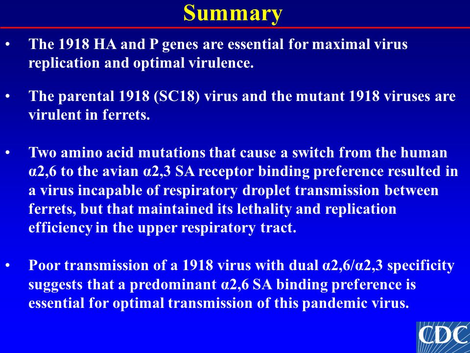 Summary The 1918 HA and P genes are essential for maximal virus replication and optimal virulence.