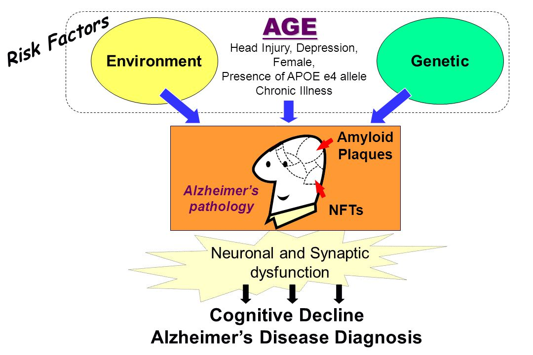 EnvironmentGenetic AGE Neuronal and Synaptic dysfunction Cognitive Decline Alzheimer's Disease Diagnosis Alzheimer's pathology NFTs Amyloid Plaques Head Injury, Depression, Female, Presence of APOE e4 allele Chronic Illness Risk Factors