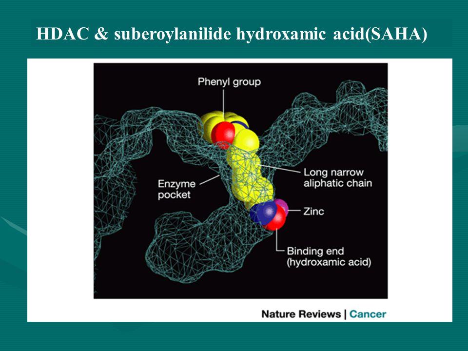HDAC & suberoylanilide hydroxamic acid(SAHA)