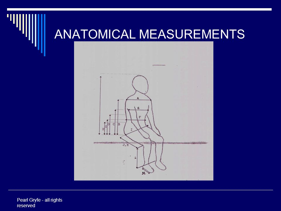ANATOMICAL MEASUREMENTS