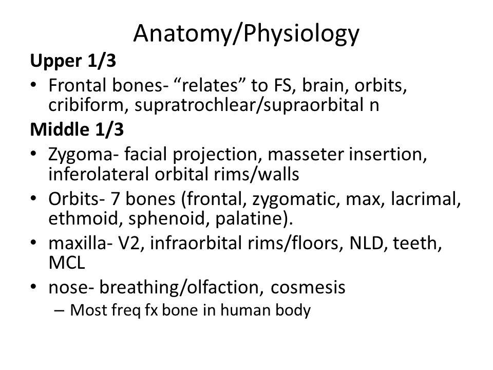 Biomechanics Facial skeleton has areas of strength and weakness Strength- buttresses/pillars Weakness- crumple zones eg.