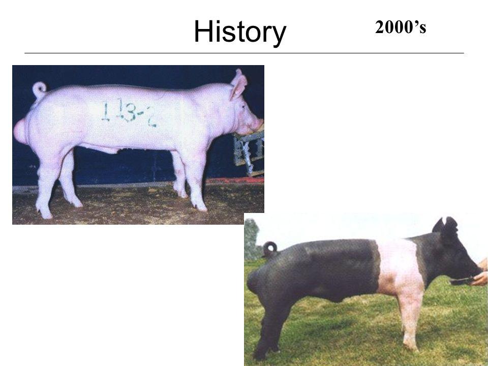 History 2000's.4 BF 8.9 LEA, 62.61% Lean