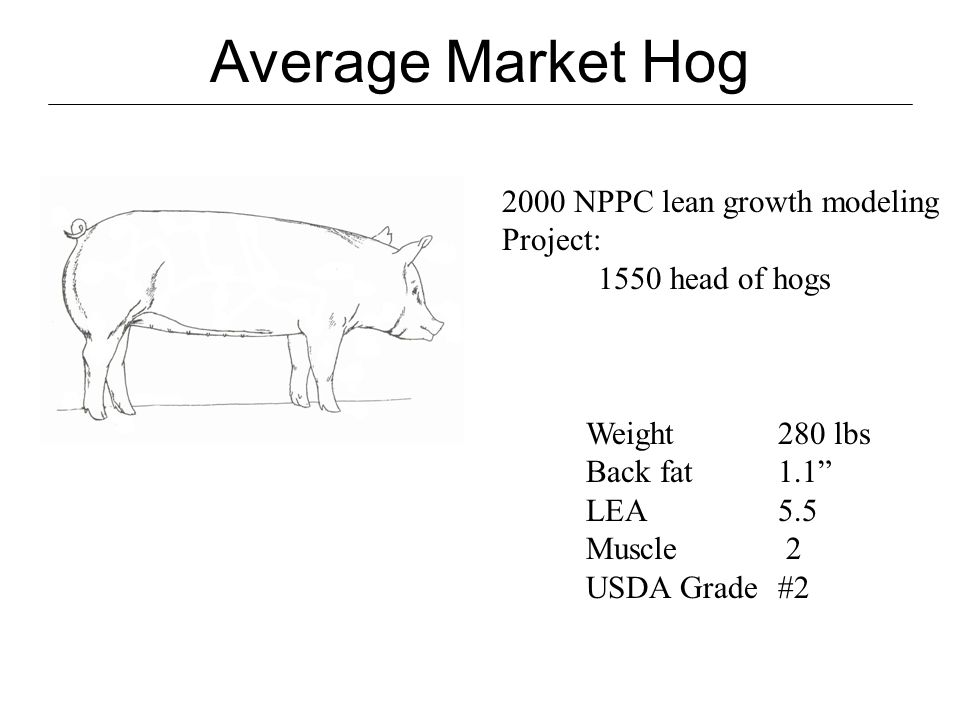 Ideal Market Hog Weight275 lbs Back fat.8 LEA6.0 + Muscle 2+ USDA Grade#1