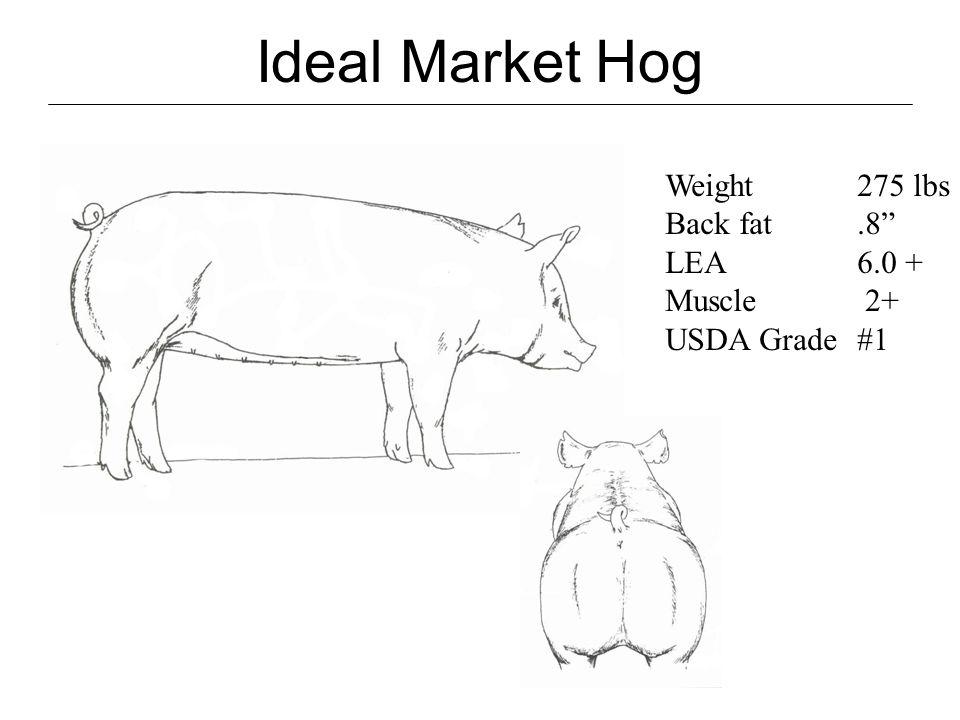 Ideal Market Hog Packers response: - 270 lbs - White Hogs prefered - Hogs that can walk - Minimum fat depth of.6 - Swift/Hormel.8 export market higher - Loin eye 7 - Minimum 54% lean - Stress Free