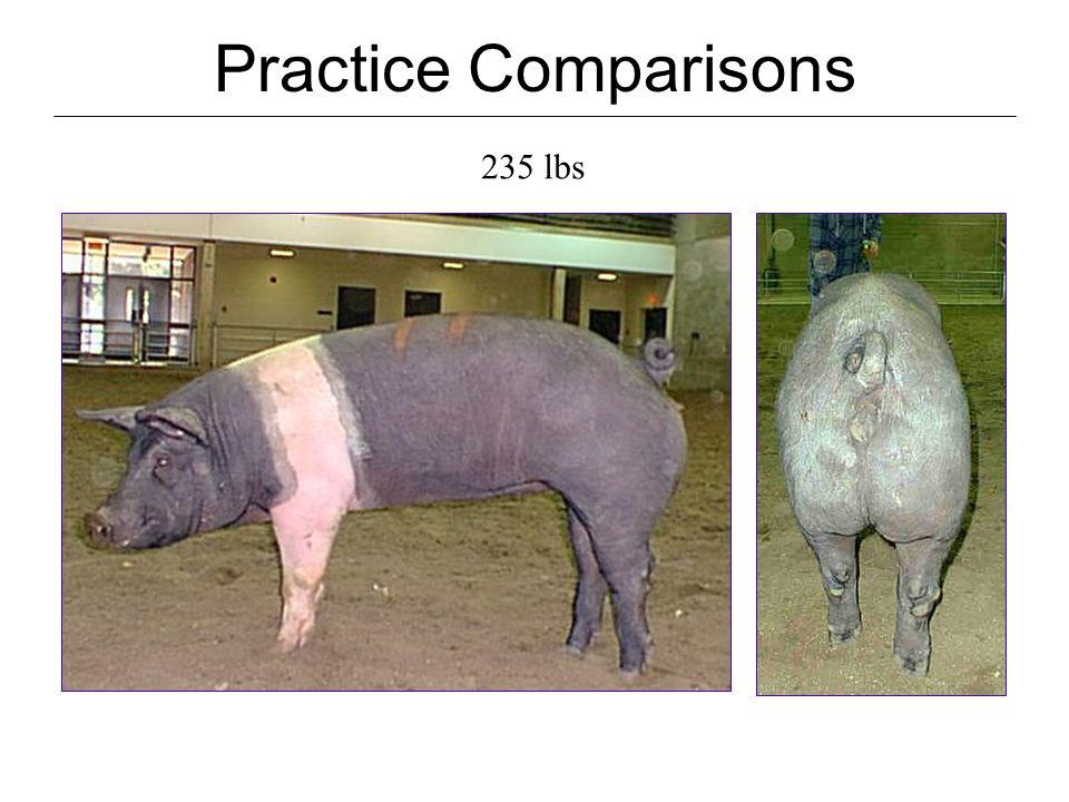 Practice Comparisons 285 lbs