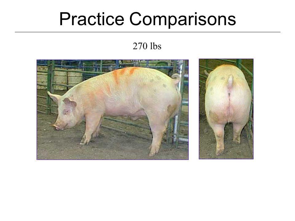 Practice Comparisons 270 lbs DP.70 HCW 195 Last rib BF 1.00 Muscle score2 USDA Grade #3 10 th Rib BF.95 LEA7.1 % Lean 50.6