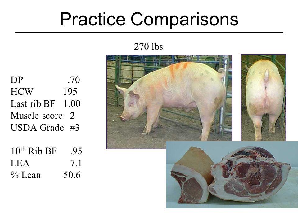 Practice Comparisons 245 lbs