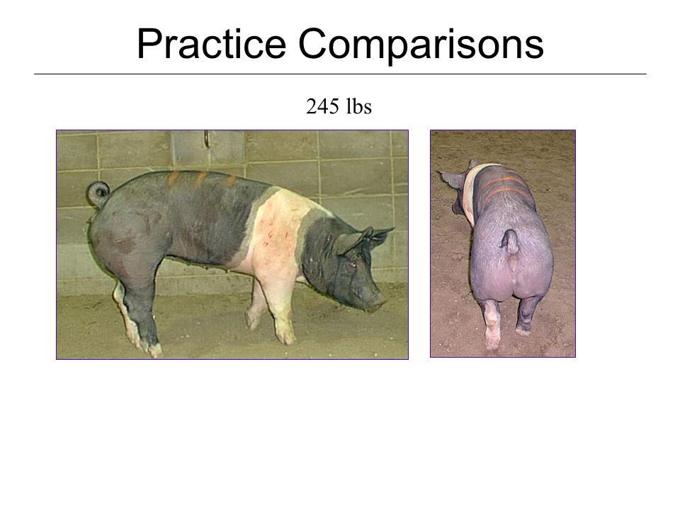 Practice Comparisons 245 lbs DP.74 HCW 181 Last rib BF.45 Muscle score2+ USDA Grade #0 10 th Rib BF.45 LEA7.4 % Lean 58.0