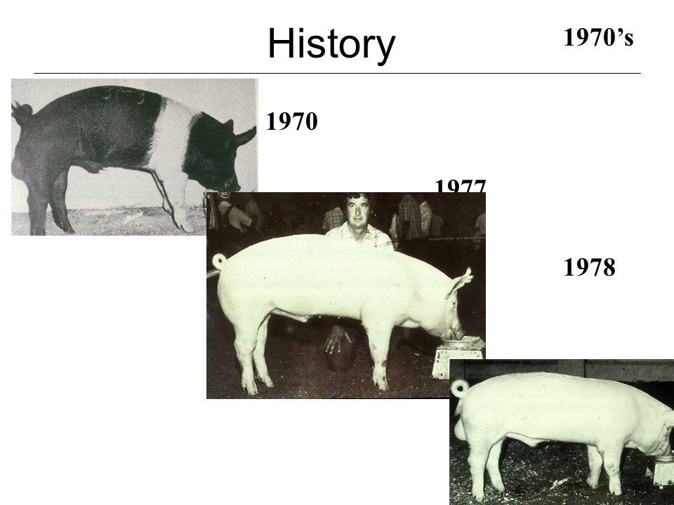 History 1982 1980's 1983 1988