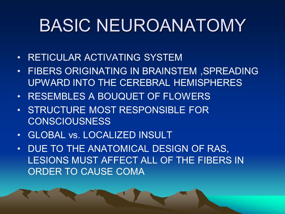 BASIC NEUROANATOMY RETICULAR ACTIVATING SYSTEM FIBERS ORIGINATING IN BRAINSTEM,SPREADING UPWARD INTO THE CEREBRAL HEMISPHERES RESEMBLES A BOUQUET OF FLOWERS STRUCTURE MOST RESPONSIBLE FOR CONSCIOUSNESS GLOBAL vs.