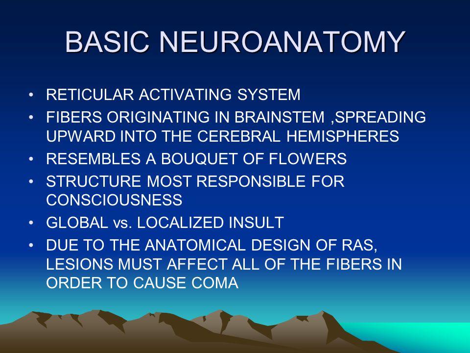 BASIC NEUROANATOMY cont.