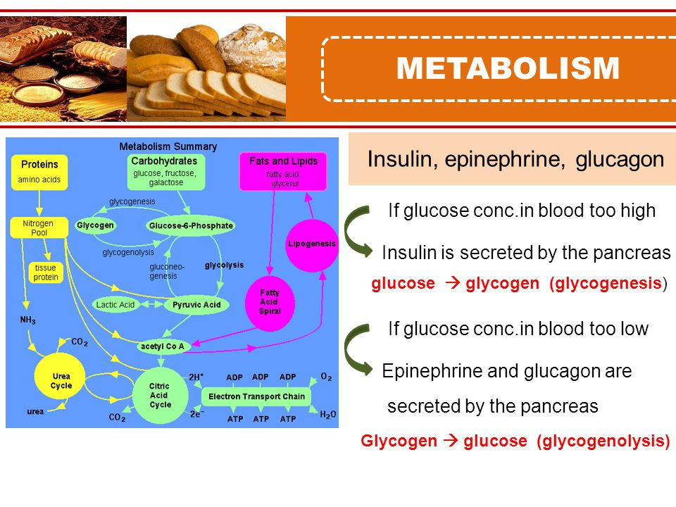 METABOLISM If glucose is needed to supply energy glucose  piruvate acid + ATP (glycolysis) pyruvic acid  acetyl CoA  citric acid (TCA cycle) During strenuous muscular activity: piruvate acid  lactic acid During resting period: lactic acid  piruvate acid  glucose (gluconeogenesis)