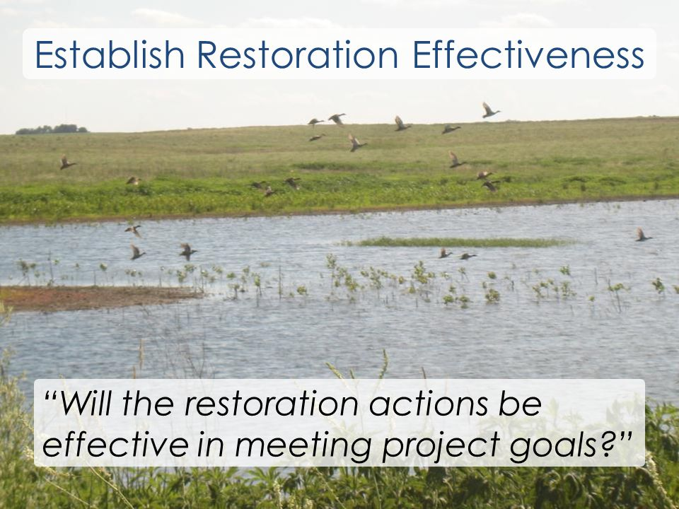 Will the restoration actions be effective in meeting project goals Establish Restoration Effectiveness