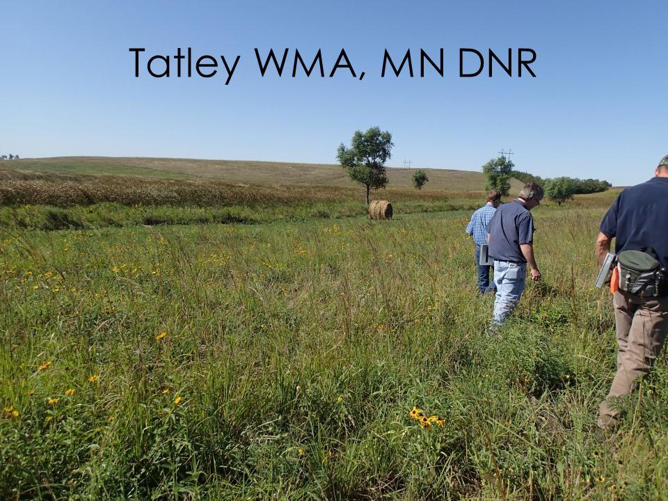 Tatley WMA, MN DNR