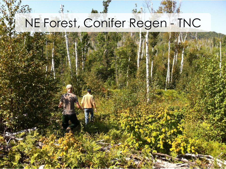 NE Forest, Conifer Regen - TNC
