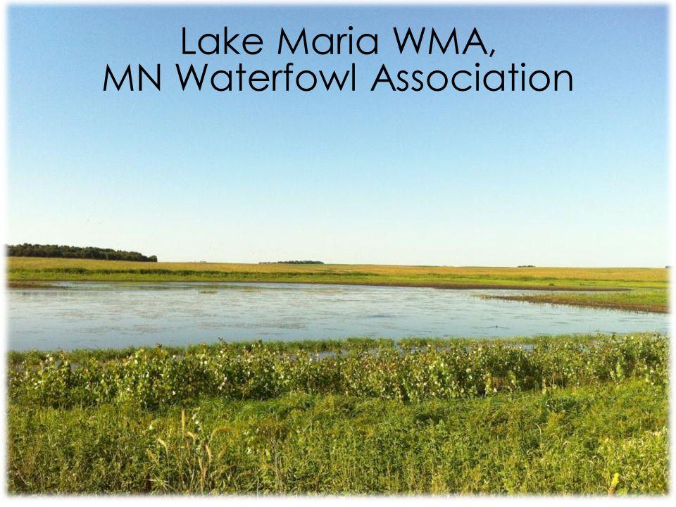 Lake Maria WMA, MN Waterfowl Association