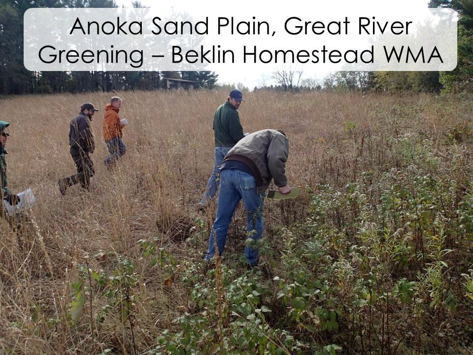 Anoka Sand Plain, Great River Greening – Beklin Homestead WMA