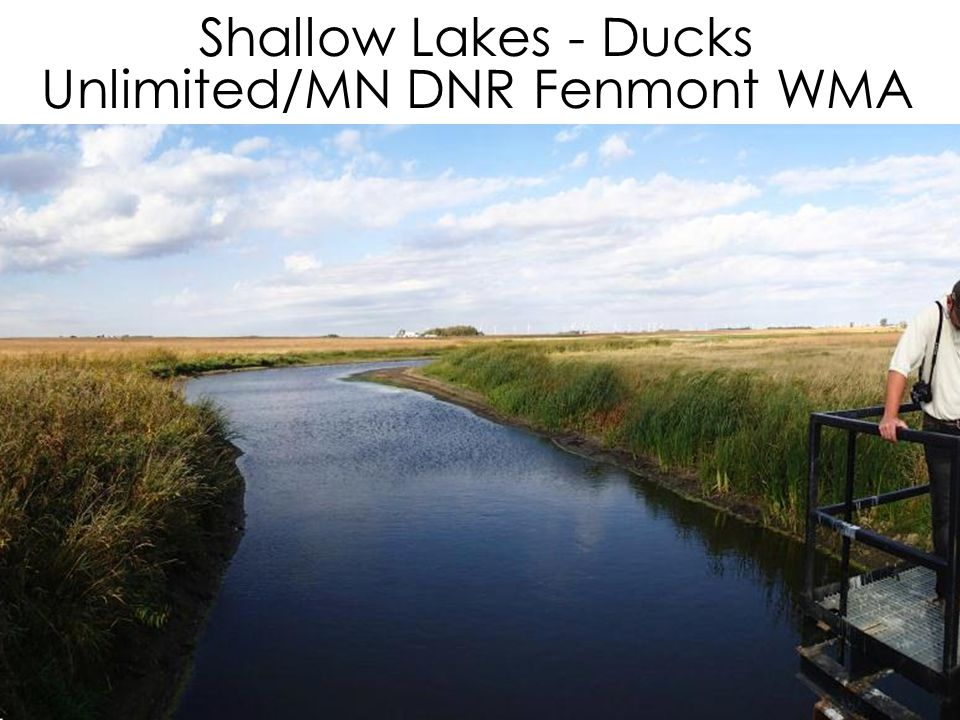 Shallow Lakes - Ducks Unlimited/MN DNR Fenmont WMA