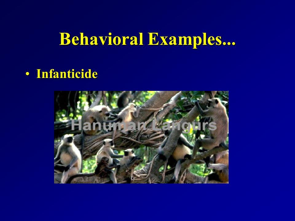 Behavioral Examples... InfanticideInfanticide